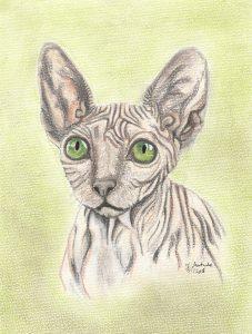 Petrov, the Sphynx cat - pet portrait, chalk pastels