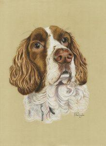 Fred - pet dog portrait, pastel pencils