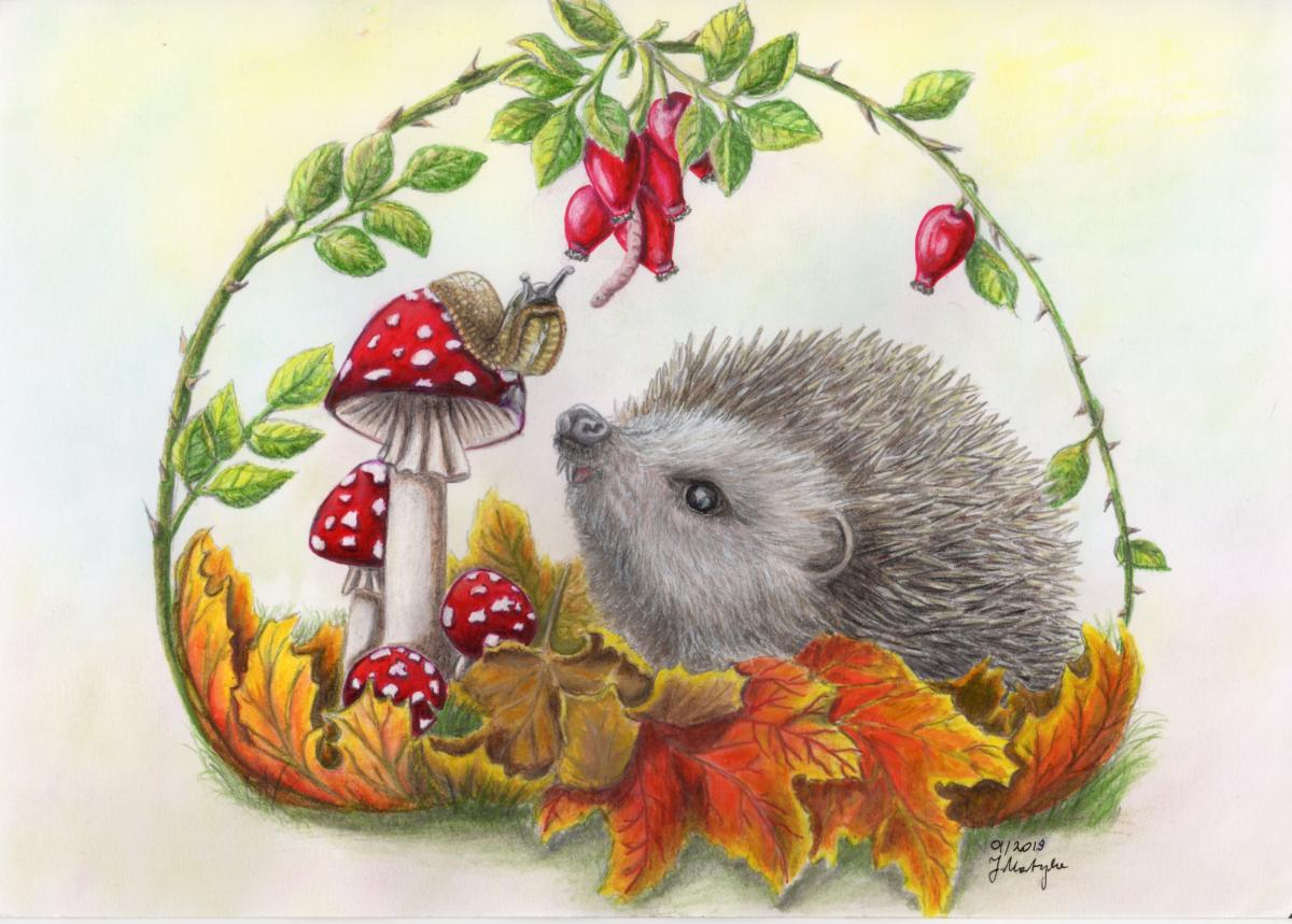 Hedgehog illustration - marker pens and pencils, J. Martynka